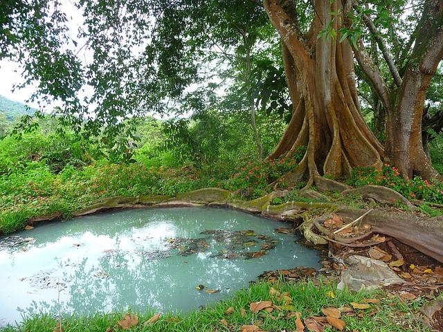 Malé jazierko na čistenie vody pri strome.jpg